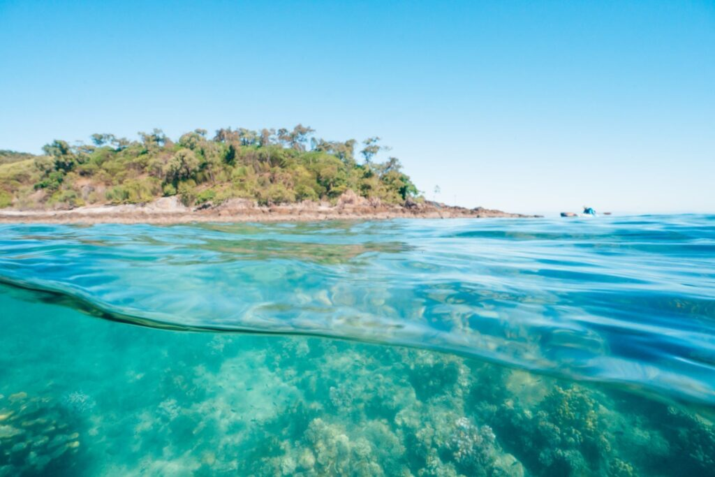 SNORKELING AT ORPHEUS ISLAND